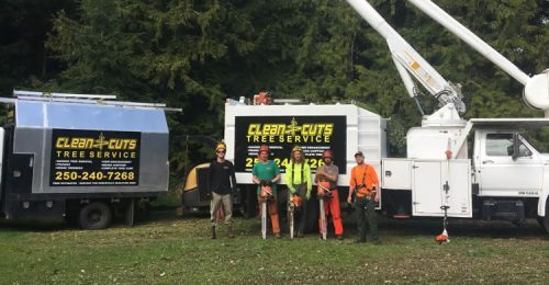 about-clean-cuts-tree-service